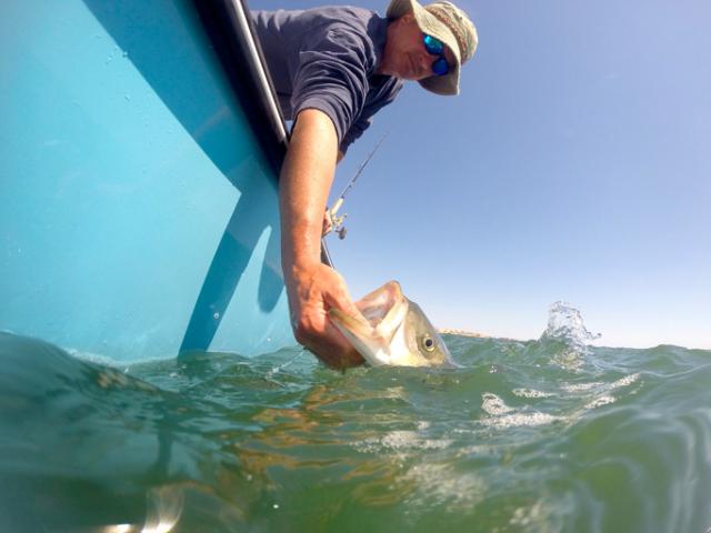Le No Kill : la nouvelle tendance de la pêche